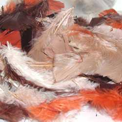 fluff plumage feathers