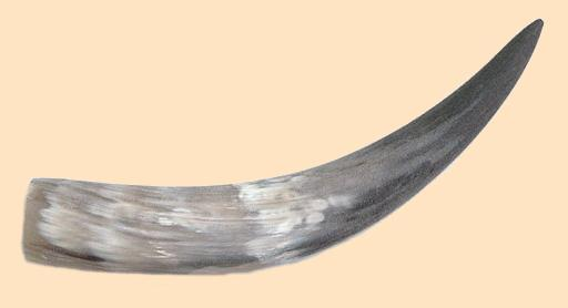 steerhorn, steer horn, powder horn, powderhorn