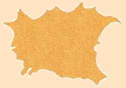 gold deerskin, deer hide, deer leather hides and skins